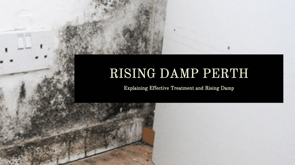 Rising Damp Perth